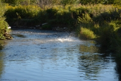 river-4
