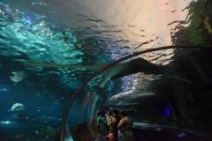 toronto-aquarium-2